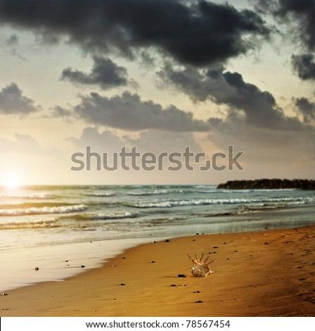 Moody landscape photo of a lonely seashell on beach shoreline with setting sun - stock photo