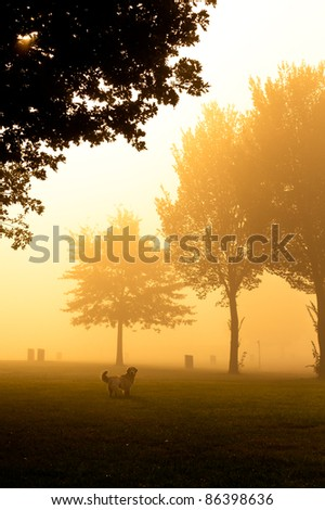 Moody orange mist over field with dog looking at camera - stock photo