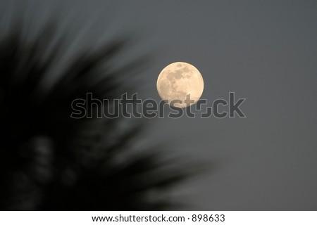 Moon Glow - stock photo