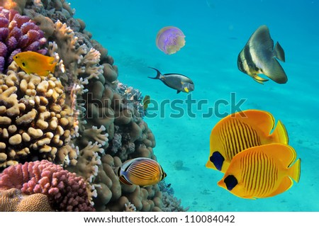 Moon jellyfish with tropical fish and corals - stock photo