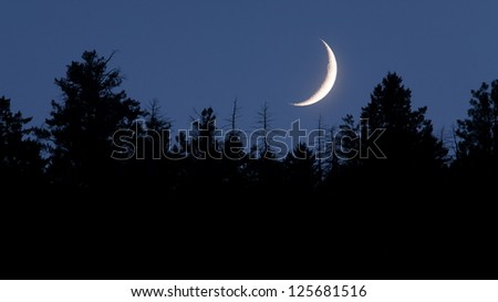 Moon nightscape, waxing / waning crescent moon phase with silhouette forest pine trees and midnight blue sky cresent - stock photo