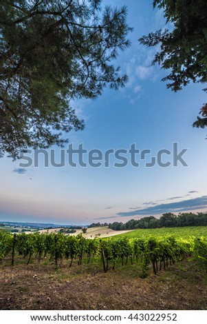 moon on the vineyard in the italian counstryside - stock photo