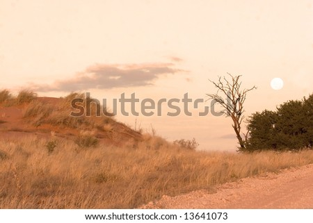 Moon over a sand dune in Kgalagadi Transfrontier Park - stock photo