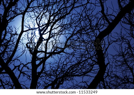 Moonlight through branches of a tree - stock photo