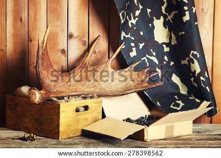 Moose antler - stock photo