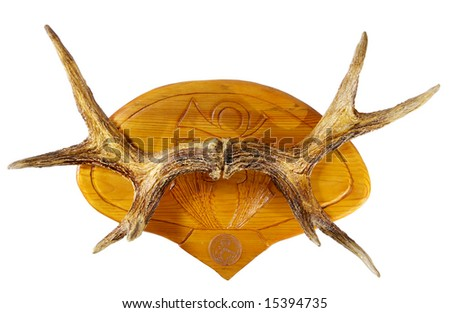 Moose horns on the pine medallion - stock photo