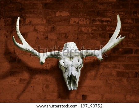 Moose skull with horns against the red brick wall - stock photo