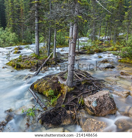 moraine lake brook in the woods canada banff national park - stock photo