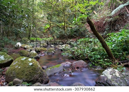 morans creek as part of world heritage lamington national park