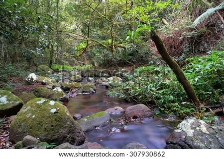 morans creek as part of world heritage lamington national park - stock photo