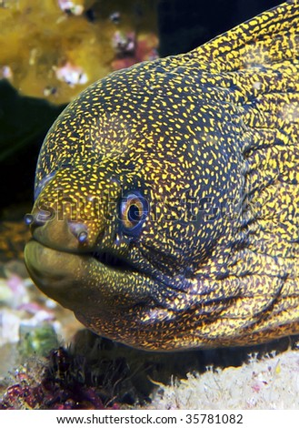 moray eel - stock photo