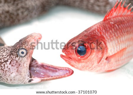 Moray eel and red fish - stock photo