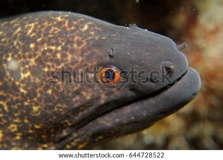 stock-photo-moray-eel-closeup-644728522.