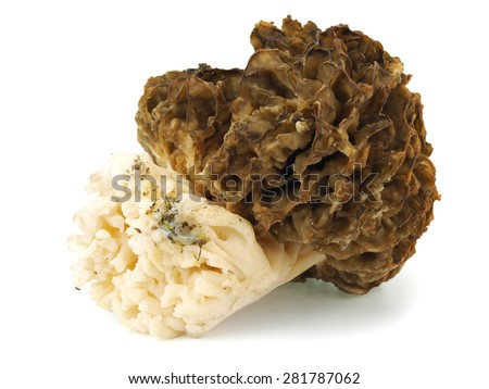 Morel mushroom (Morchella esculenta) on a white background - stock photo