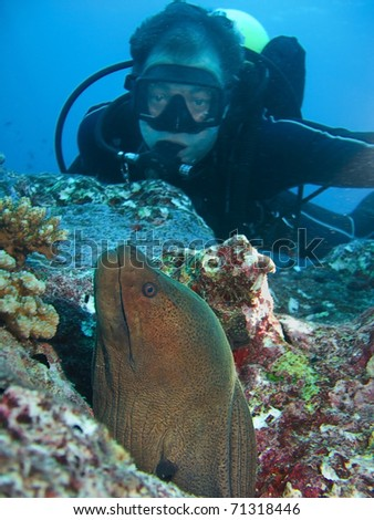 Morey and diver - stock photo