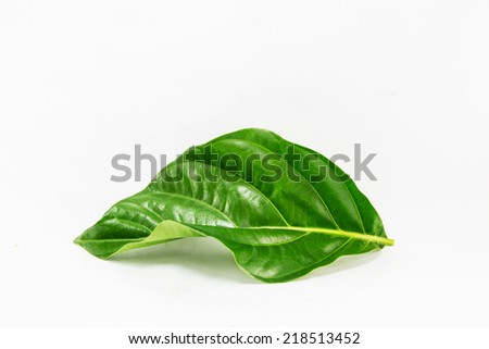morinda leave on white background - stock photo