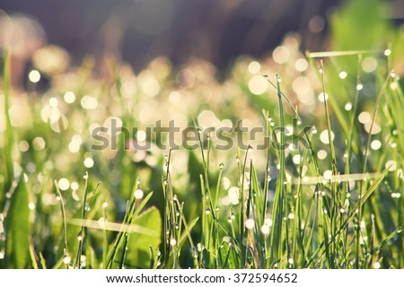 Morning dew.Dew drop on a blade of grass. - stock photo