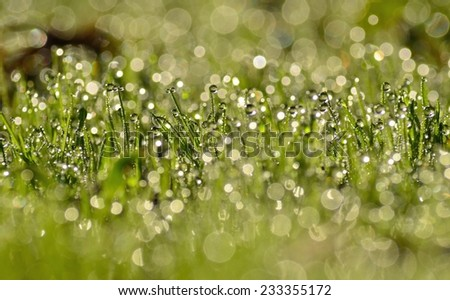 Morning dew drops on the green grass - stock photo