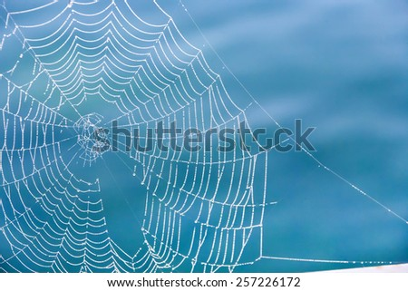 Morning dew on a spider web - stock photo