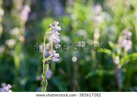Morning dew on a spring wildflowers.  - stock photo