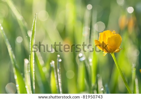 Morning dew on grass with yellow flower; beautiful nature background with shallow depth of field - stock photo