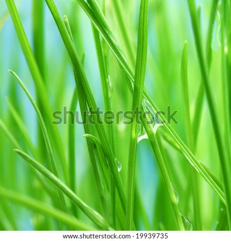 Morning dew on the green grass - stock photo