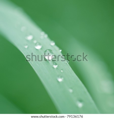 Morning dew pearl on green grass - stock photo