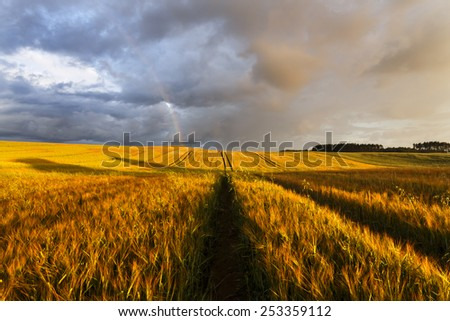 Morning field in north Poland with rainbow/ Morning field sunrise - stock photo