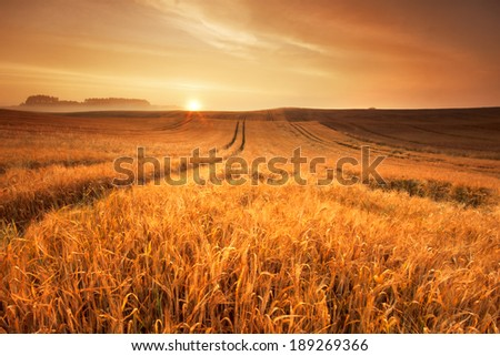 Morning Field./ Morning Field. - stock photo