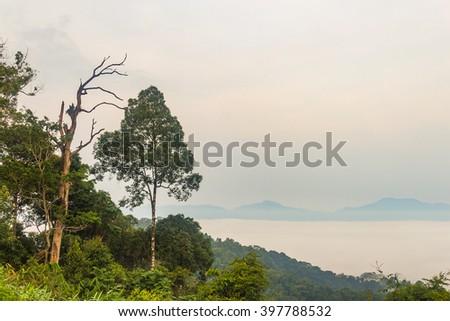 Morning fog and tree top in rainforest, KaengKraChan National park, Thailand. - stock photo