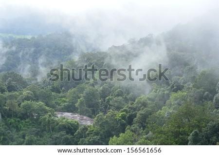 Morning fog in dense tropical rainforest at Khao Yai national park, Forest landscape - stock photo