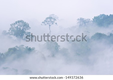 morning fog in dense tropical rainforest, kaeng krachan, thailand - stock photo