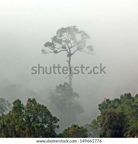 Morning fog in dense tropical rainforest, kaeng krachan, Thailand. - stock photo