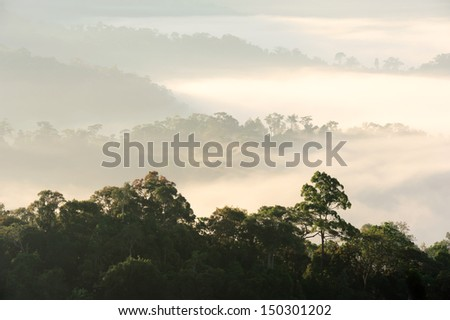 morning fog in dense tropical rainforest, kaeng krachan, thailand