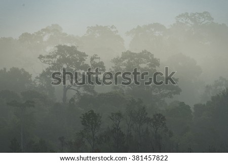 morning fog in dense tropical rainforest, Thailand - stock photo