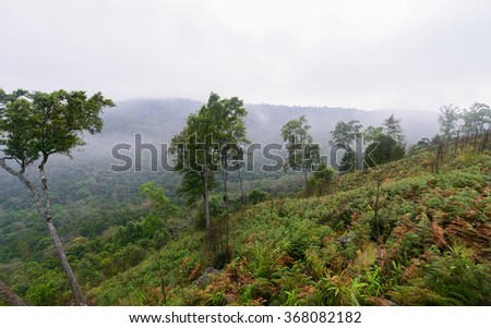 morning fog in forest, Thailand - stock photo