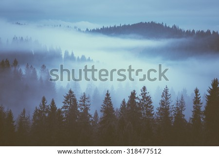 Morning fog on the mountain slopes. Carpathian Mountains. Ukraine, Europe. Color toning. Low contrast - stock photo