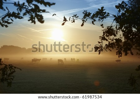 Morning fog over a meadow with cows in Holland - stock photo
