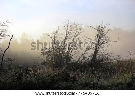 Morning fog rising off a marsh with silhouetted trees.