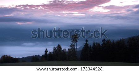 Morning from the Alpen with pine trees and fog