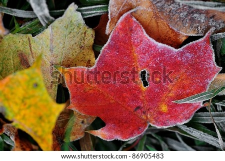 Morning frost - stock photo