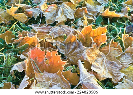Morning frost in autumn - stock photo
