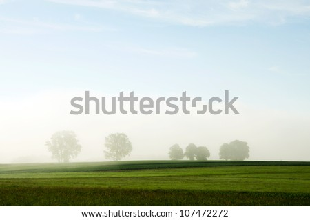 morning glory - stock photo