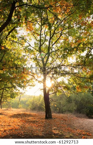 Morning in the oak grove in autumn