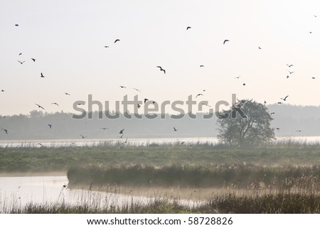 Morning landscape with lots of birds at a lake - stock photo