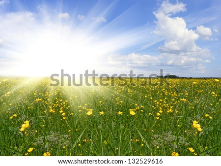 morning landscape with sun and meadow
