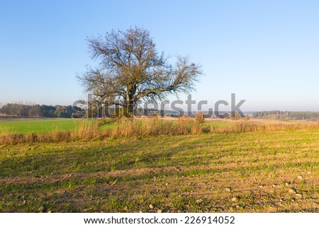 morning landscape with trees on green field