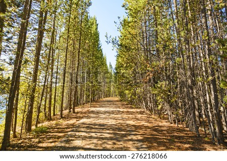 Morning Light and Shadows on a Tree Lined Rural Road in Grand Tetons National Park in Wyoming - stock photo
