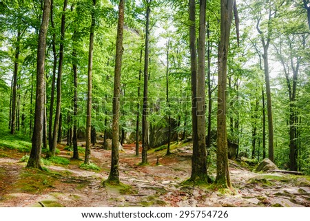 Morning light entering the Forest  - stock photo
