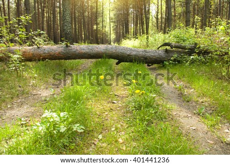 Morning light falls on a forest road - stock photo